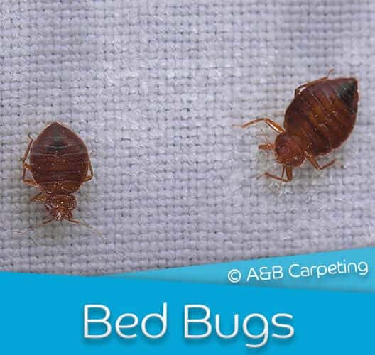 Bed Bug Treatment - Brooklyn